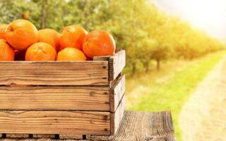 Цитрусовые — предотвращают ожирение и инсульт!