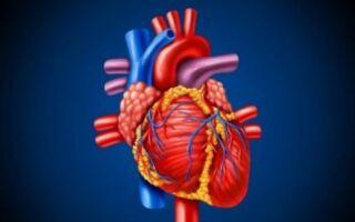 Для этого, как и при нашем сердечном приступе, наше тело предупреждает об этом. И вот 6 знаков